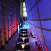 Dinner in the Darwin Centre - Natural History Museum